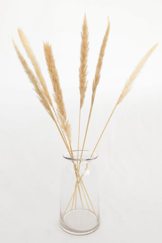 ODL Pampas Grass - Small - Pack of 6