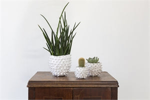 Prickly White Cactus Pot
