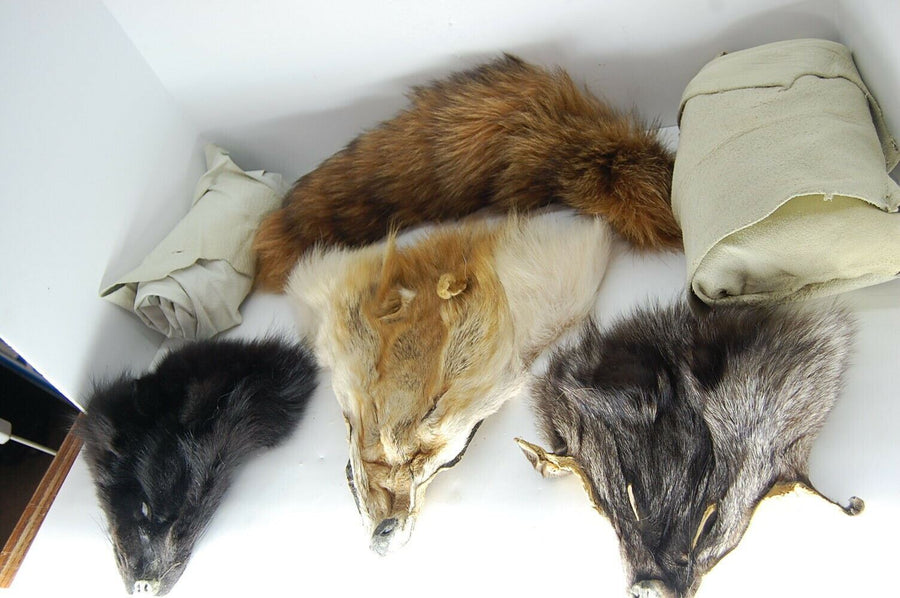 Lotto di pelle e Pellicce Elk Daino Coyote Fox Badger Nativi Americani Decor