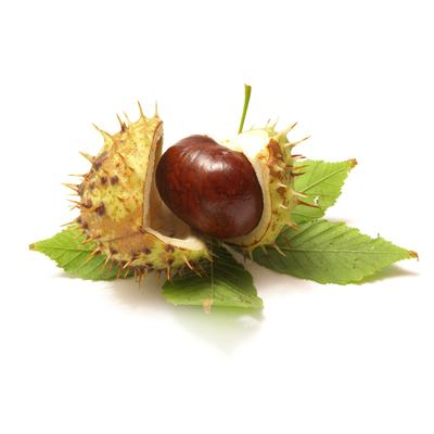 Horse Chestnut Extract in Skin Care