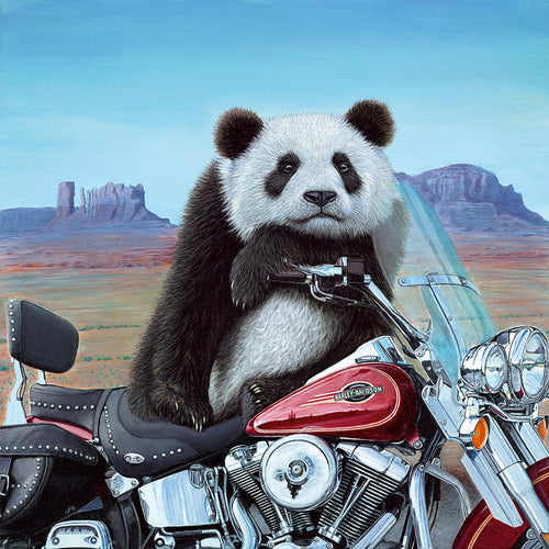 Steve Tandy | Born To Be Wild