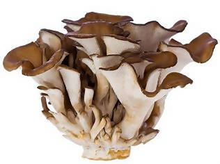 Fresh Maitake Mushrooms