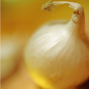 Glendale Gold Onion