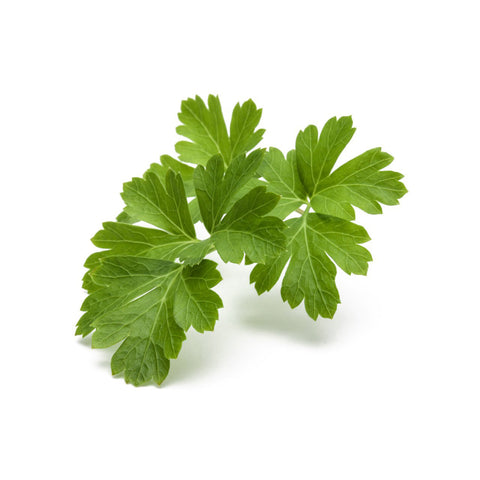 Click & Grow Parsley Plant Pods