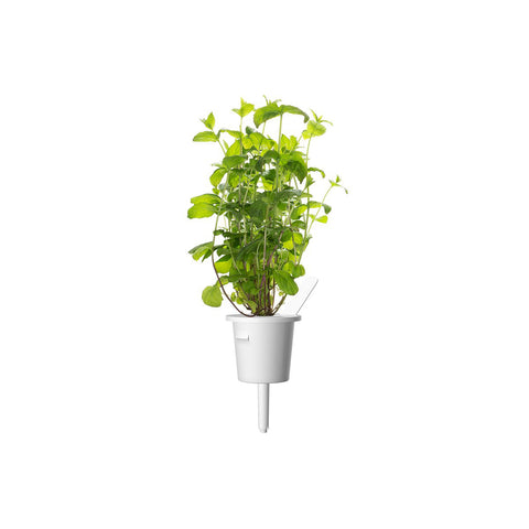 Click & Grow Peppermint Plant Pods
