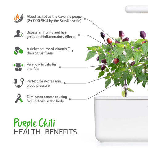 Click & Grow Purple Chilli Plant Pods