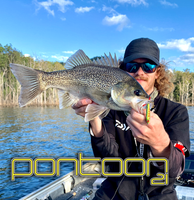 Pontoon 21 Paco Spoon 10.5g & 14 gram