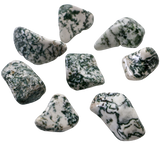 Tree Agate Tumbled Crystal Tumbled Crystal - Hekatos Healing Crystals and Spirituality Supplies