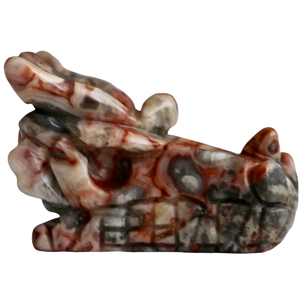 Crazy Lace Agate Dragon Skull (Choose Yours) Carved Crystal - Hekatos Healing Crystals and Spirituality Supplies