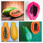 100 Pcs/bag Bonsai  Papaya plant flores Delicious Fruit, plantas Unique Very RARE garden decoration plant