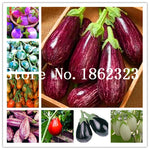 100 pcs Rare eggplant bonsai, flower potted plant, garden fruit trees, southern United States, Bonsai sweet fruit Easy to Grow