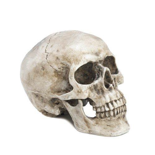 Skull Decorative Accent (pack of 1 EA)