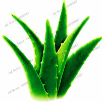 100pcs/bag Aloe vera flores,rare herb plantas Tree plante bonsai plants for home and garden DIY,edible Beauty cosmetic use