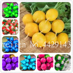 Bonsai 200 Pcs Rare Rainbow Colors Radish Seedsplants Vegetable Juicy And Nutritious Early Spring Radish Plants for Home Garden