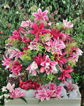 bonsai 100seeds/pack Specials Rare Lily Potted Bonsai Plant Lily Flower for Home Garden free shipping