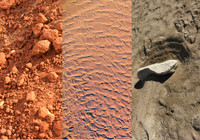 Soils 101: How to know your type of soil, and what it means for you