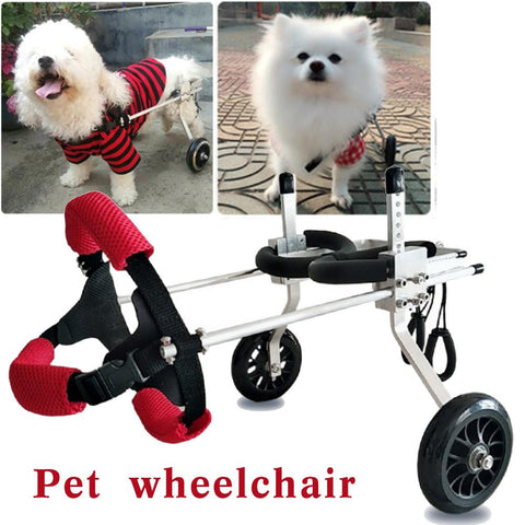 White Dogs Using Pet Wheelchair
