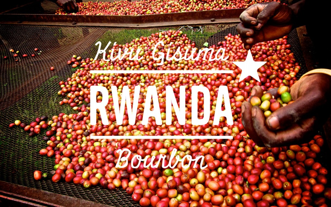 Hello Rwanda! Stunning new coffee from The Gisuma Co-operative