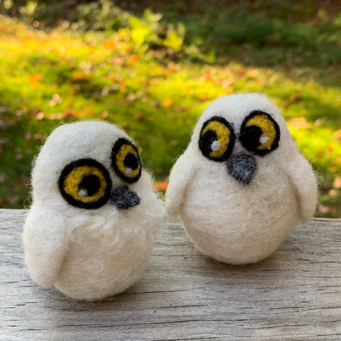 Baby Snowy Owls (pair)