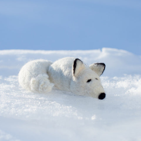 Arctic Fox Kit - Retiring in 2020!!