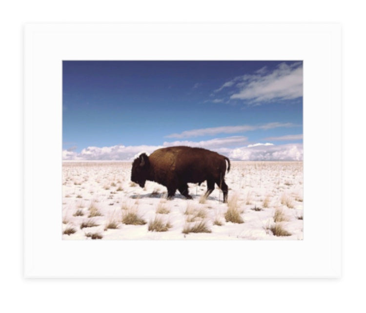 Bison on Antelope Island