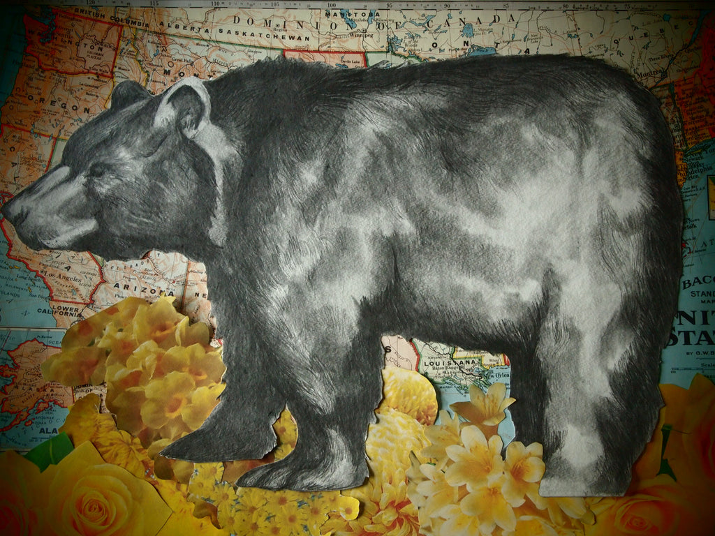 Bear illustration by Krys DeMauro