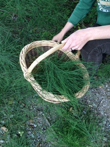 Collecting Horsetail
