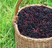 elderberries in basket