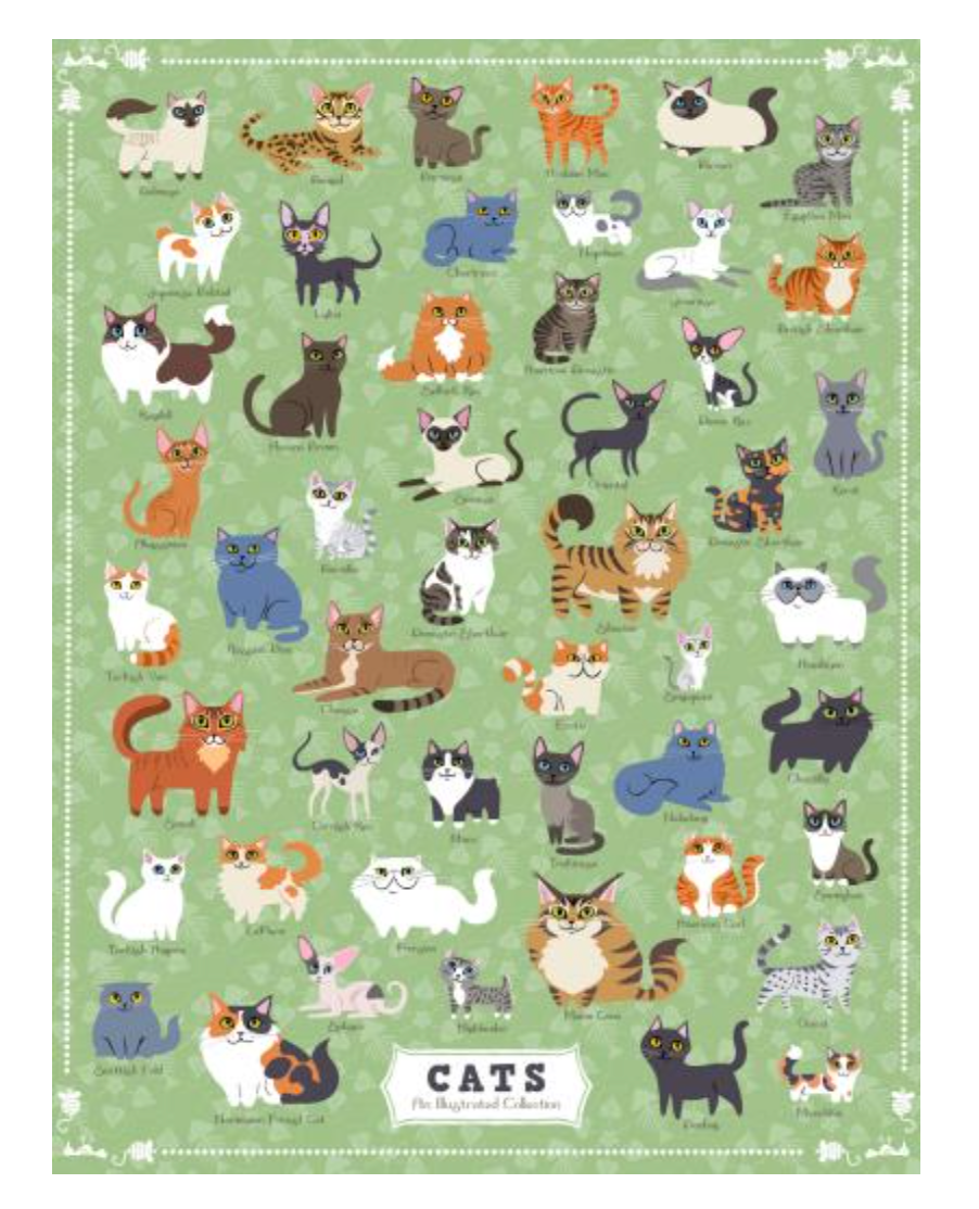 Cats Puzzle, True South