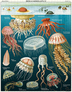 Jellyfish Jigsaw Puzzle, Cavallini & Co.