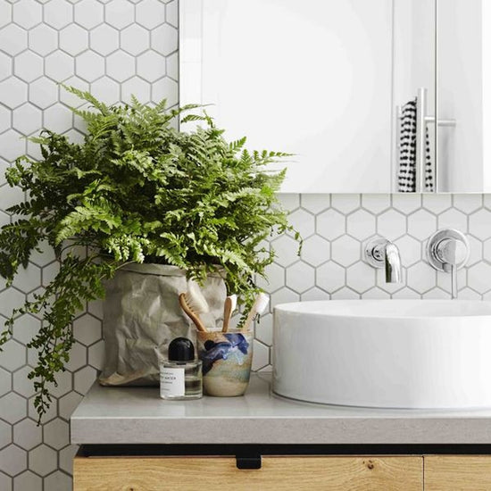 Large fern planted in Uashmama paper bag in front of white hexagon backsplash, sitting on a bathroom countertop next to toothbrushes, a mirror and sink.