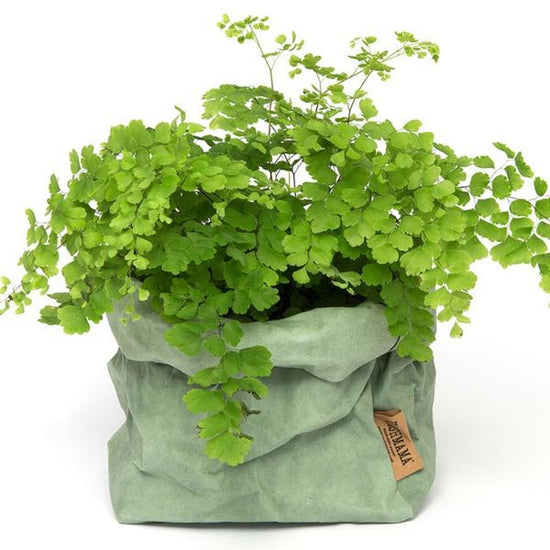 Garden herbs planted in green Salvia Uashmama paper bag.
