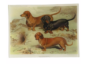 Dachshunds Tray