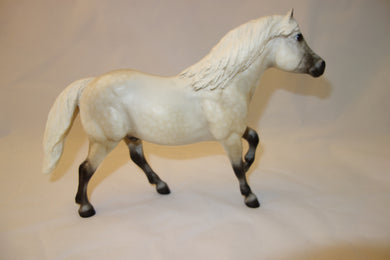 Halflinger Highland Pony light grey