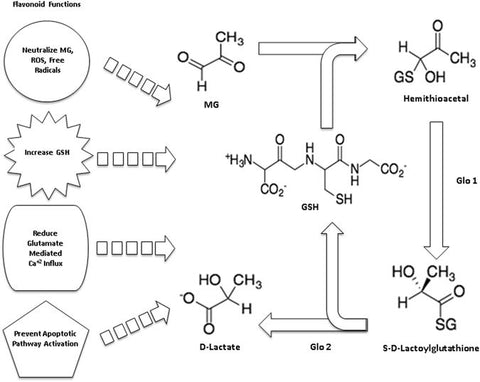 Flavonoids and the glyoxylase pathway