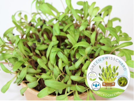 Mighty Microgreen Combo