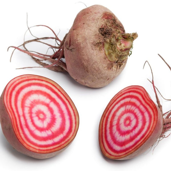 Chioggia Beet Red, White, Orange & Crimson Pink
