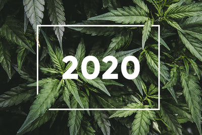 2020 - A Year in Review with RCU - Responsible Cannabis Use