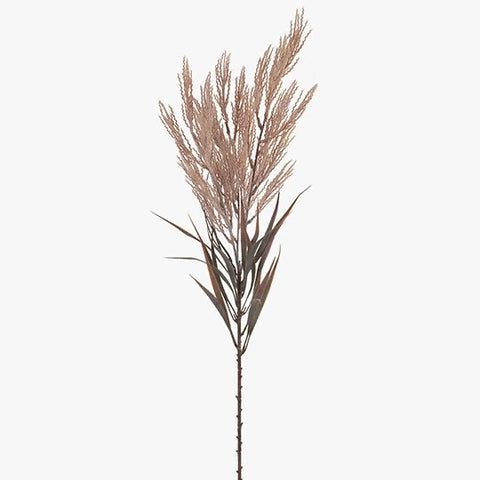 Plume Grass Spray Bush