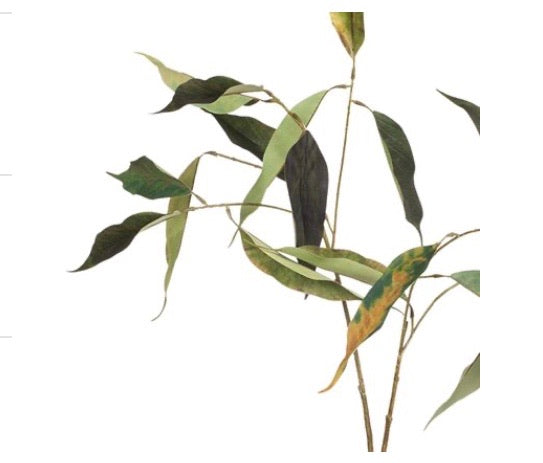 Eucalyptus Gum Leaf Spray