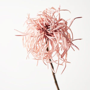Chrysanthemum Spider -Dusty Pink 66cm