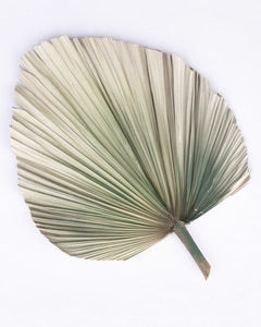 Natural Fan Palm Grey Green 60cm