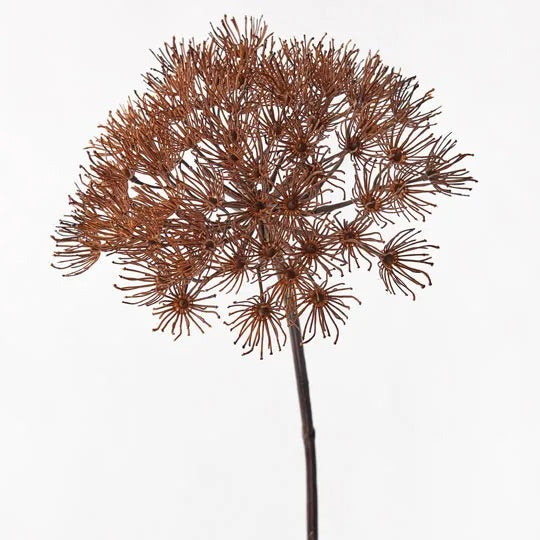 Allium - Coffee 81cm