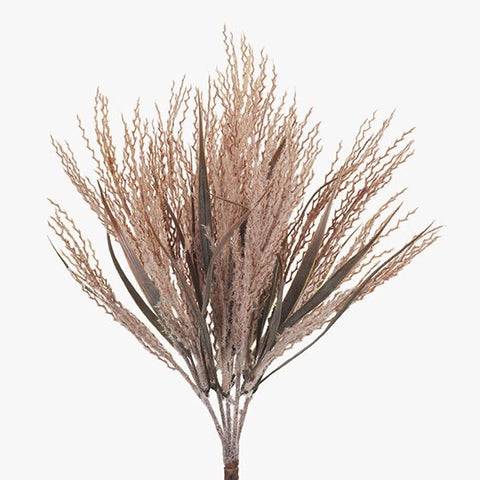 Plume Grass Bush Stem Blush or Cream