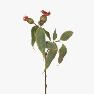 Eucalyptus Pod Flower Red 50cm