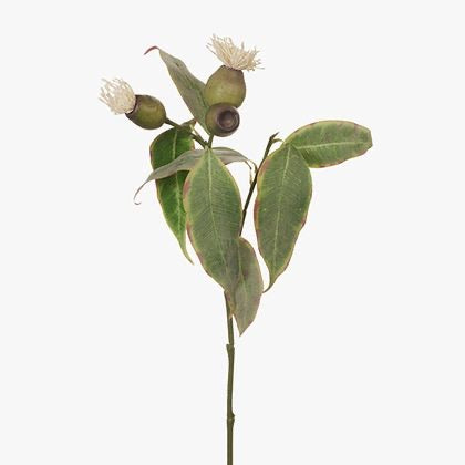 Eucalyptus Flower Pod Cream