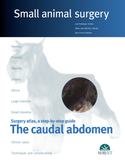 The Caudal Abdomen. Small Animal Surgery