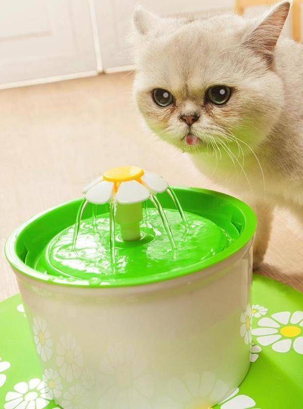 Cute Pet Water Drinking Fountain