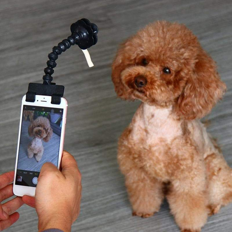 Dog Selfie Stick Treat Holder