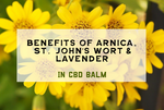 Benefits of Arnica, St. John's Wort and Lavender in CBD Balm